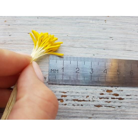 Stamens (long), yellow, 2 mm