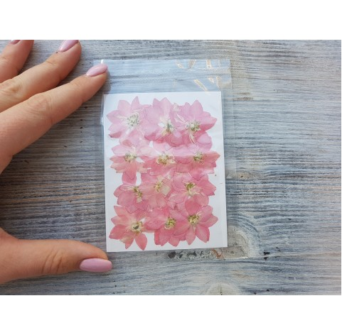 Dried flowers, cipria, pink, 12 pcs.