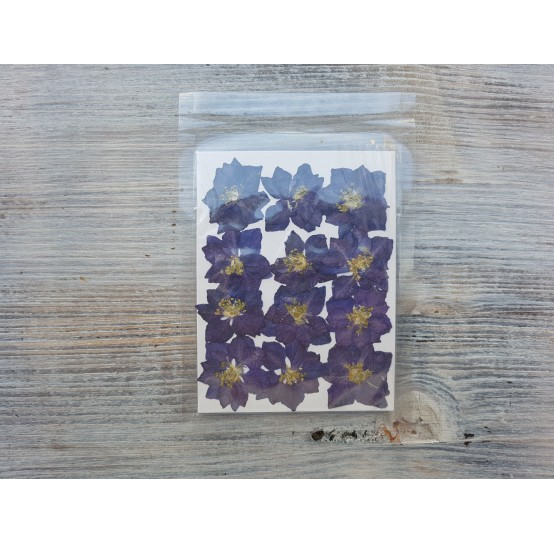Dried flowers, purple, 12 pcs.