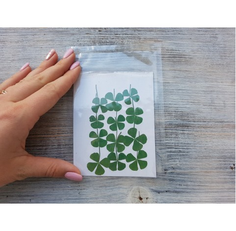 Dried flowers, four-leaf clover, green, 12 pcs.