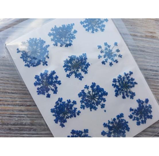 Dried flowers, blue, 12 pcs.