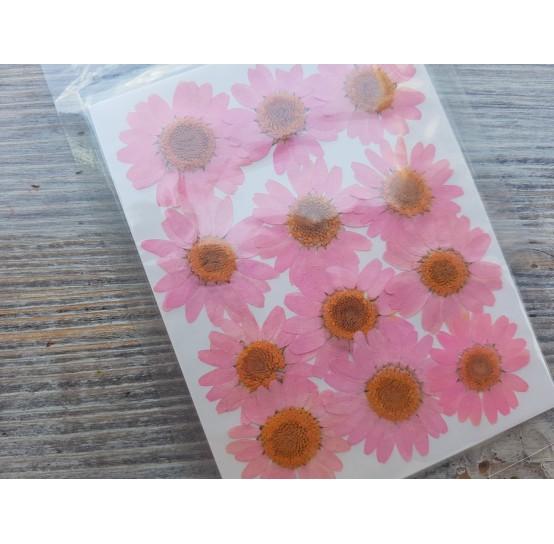 Dried flowers, chamomile, pink, 12 pcs.